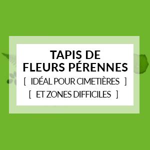 Tapis de fleurs pérennes (idéal pour cimetières et zones difficiles)